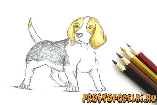 Как нарисовать собаку-title