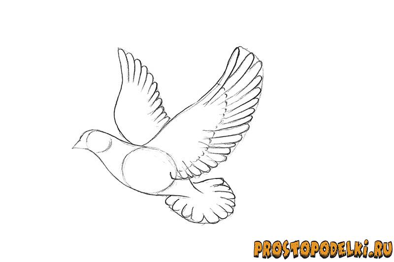 Нарисовать голубя мира-05