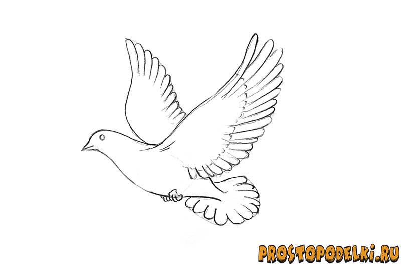 Нарисовать голубя мира-06