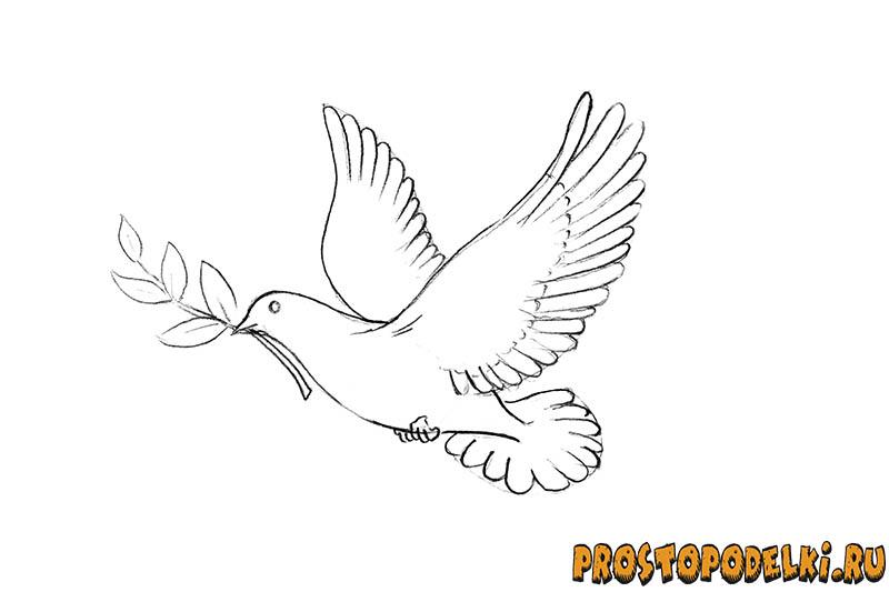 Нарисовать голубя мира-07