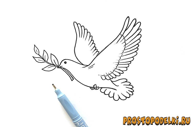 Нарисовать голубя мира-08