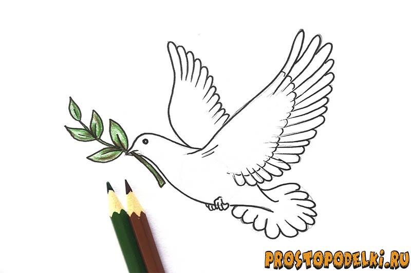 Нарисовать голубя мира-09