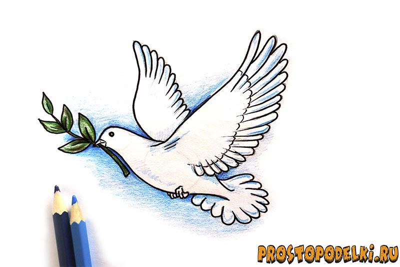 Нарисовать голубя мира-10