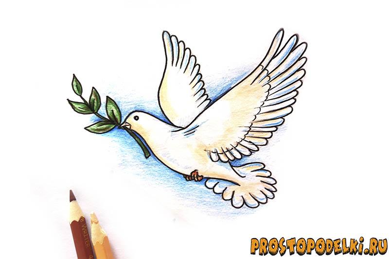 Нарисовать голубя мира-11