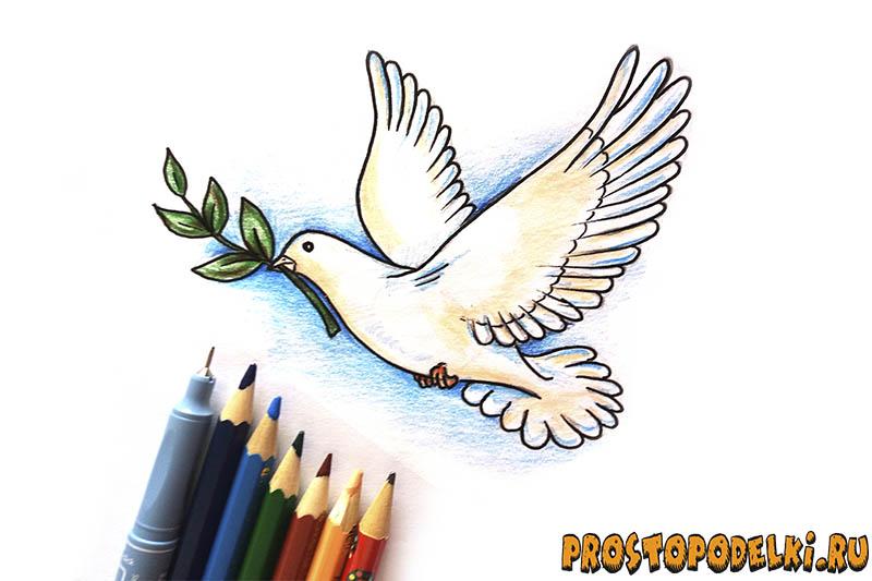 Нарисовать голубя мира-title