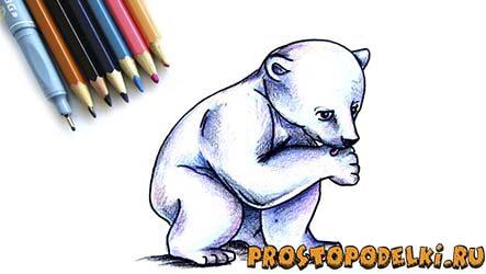 Как нарисовать белого медведя